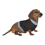 Dachshund Sweatshirt- Black with Blue Rib