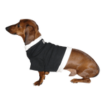 Dachshund Sweatshirt - Black with Cream Rib