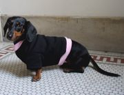 Dachshund Heavyweight Sweatshirts