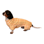 Dachshund Indoor/Outdoor Bodysuit - Mango Plaid
