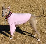 Italian Greyhound Lightweight Shirt - Pink