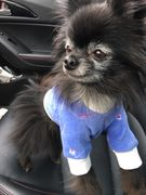 Toy & Teacup Dog Embroidered & Sculpted Fleece Sweaters