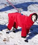 Italian Greyhound Crimson XHeavy Windblock Fleece Hooded Bodysuit