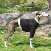 Whippet Sweatshirts - Black & Cream