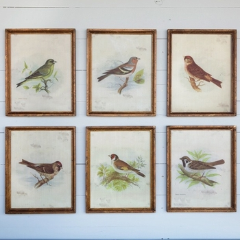 Vintage Bird Prints (Set-6)