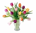 Mixed tulips