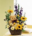 Basket  Bear Arrangement