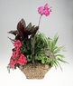 Basket of green and blooming plants