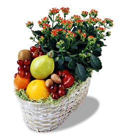 Fruits Gift Baskets