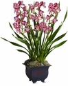 Large Simply Cymbidium