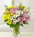 Mixed daisy in vase