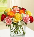 Modern Roses - One Dozen Assorted