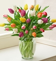 Multicolored Tulips Just because