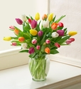 Multicolored Tulips Arrangement