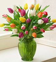 Multicolored Tulips, 30 Stems in clear vase