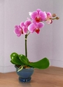 Orchid Plant  4 inches