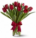 Radiantly Red Tulips Flowers