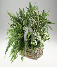 Sympathy Mixed basket of green and white blooming plants.