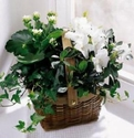 White Assortment Basket Plants
