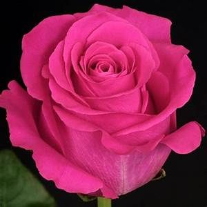 Whole Sale Flowers-Roses