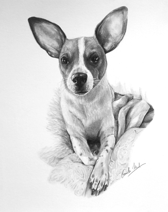 Sep 8 - Intro to Animal Portraiture with Gaella Materne