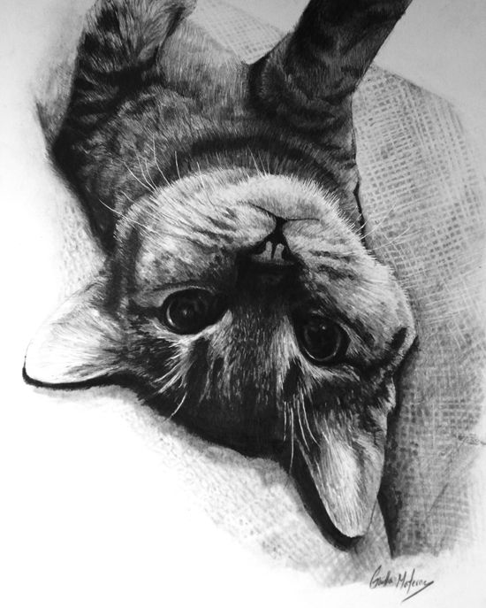 June 8 - Drawing Realistic Animals with Gaella Materne