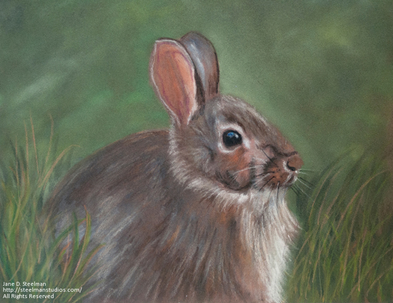 (Canceled) Oct 20 - Pastel Animal Portraits with Jane Steelman