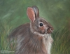 Oct 20 - Pastel Animal Portraits with Jane Steelman