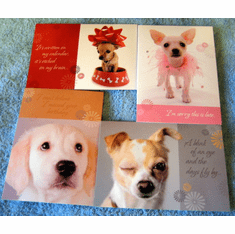 Belated - Birthday Pals-Box Of 12 Greeting Cards