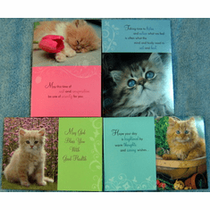 Curious Kittens-Get Well-12 Cards