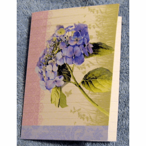 Floral Rapture, 12 Notes Cards-Boxed