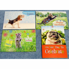 Furry Friends- 12 Birthday Cards