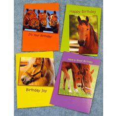 Horses  Birthday-12 Greeting Cards