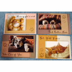 Quiet Reflections Get Well- 12 Greeting Cards