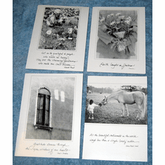 Thank You- Exquisite-Box Cards-
