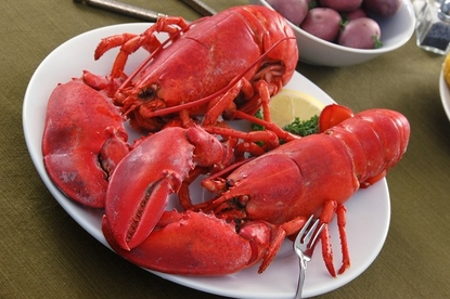 2 Pack Of Fresh Steamed 1 3/4 lb. Lobsters!