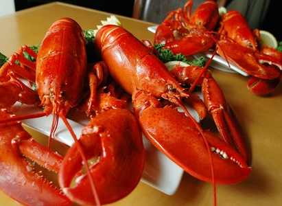 4 Pack Of 1 1/4 Pound Live Maine Lobsters!