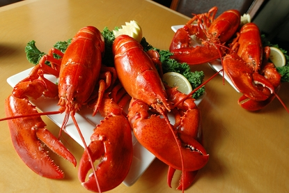 4 Steamed 2-2 1/2 lb. Maine Lobsters!