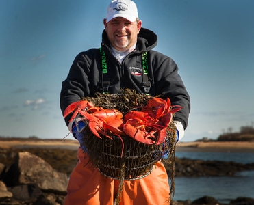 6 Pack Of 1 1/4 pound Live Maine Lobsters!