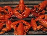 6 Pack Of 2 1/2 -3lb. Live Maine Lobsters!