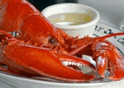 All Size Live Maine Lobsters!