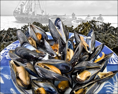 Fresh Maine & PEI Mussels!