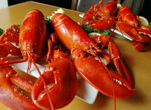 ON SALE! 4 Packs of Live Maine Lobsters!