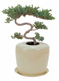 Beige Bonsai Tree System Cremation Urn