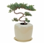 Beige Plant System Cremation Urn For Flowers Or Plants