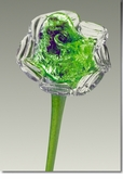 Green Eternal Bloom Cremains Encased in Glass Cremation Long Stem Rose