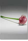 Pink Eternal Bloom Cremains Encased in Glass Cremation Long Stem Rose