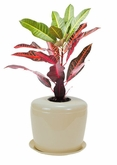 The Indoor Planter Cremation Urn