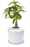 White Bonsai Tree System Cremation Urn