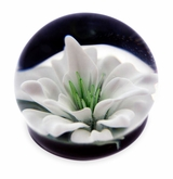 White Flower Cremains Encased in Glass Cremation Paperweight